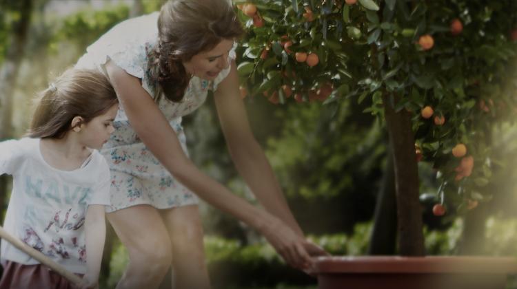 让园艺溶入您的生活